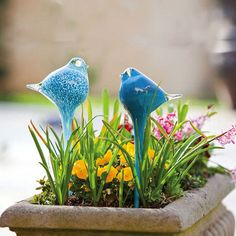 this blown glass water globe keeps your favorite potted plants watered in charming style.