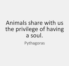 #love #pets