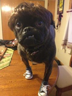 Animals Who Are Doing It Right - 24 Pics  This dog!!