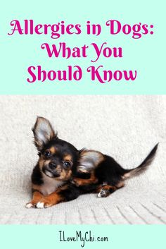 Allergies in Dogs: What You Should Know via @cathyratcliffe