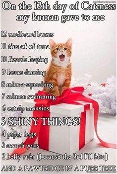 12days of Cat-mus.jpg