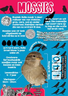 Afrikaanse taakhulp: Mossies Infografika. Voëls. Feite. Als oor mossies. Animals. Diere. Birds. Hoezit. Home Schooling, Afrikaans, School Projects, Kids Learning, Homeschool, Teacher, Unit Studies, Education, Montessori