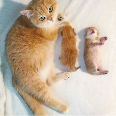 .momma kitty with her babies.