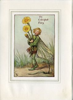 Coltsfoot Flower Fairy Vintage Print, c.1927 Cicely Mary Barker Book Plate Illustration by TheOldMapShop on Etsy