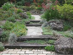 Paths and steps through the garden