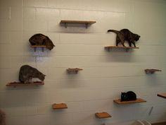 Customers of Square Cat Habitat