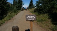 The Olympic Peninsula in Washington offers a ton of opportunities for pet friendly travellers, but you have to know where to go. Explore the best (and worst) of Hurricane Ridge, Fort Worden State Park and  Post Townsend with the pet friendly travel experts at GoPetFriendly.com