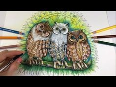 (99) Happy Three Owls | Tangle Wood Coloring Book by Jessica Palmer - YouTube