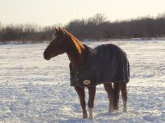 Should you Blanket Your Horse in Winter?