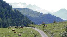 trattberg austria