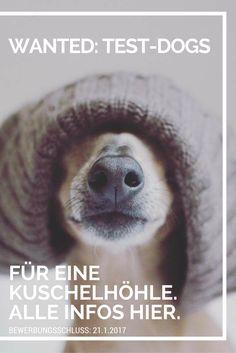 Wir suchen verkuschelte Hunde, die die Kuschelhöhle von vermopst testen möchten. Alle Infos gibt's hier.