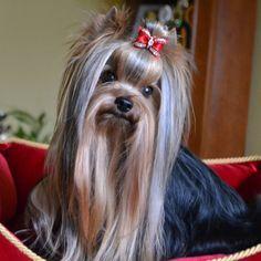 blog de mascotas - Buscar con Google