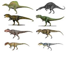 Row 1: Spinosaurus aegyptiacus and Oxalaia quilombensis Row 2: Carcharodontosaurus saharicus and Giganotosaurus carolinii Row 3: Tyrannosaurus rex and Tarbosaurus bataar Row 4: Allosaurus/Epanterias amplexus and Allosaurus fragilis