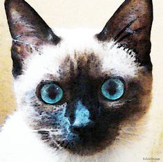 siamese cat prints | Siamese Cat Art - Black And Tan Painting