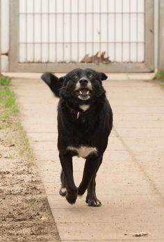 Another Hope for Romanian Strays enjoying running for joy, rather than fear, in Germany