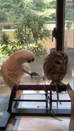 #birds #owl #parrot #parrotvideos #owlvideos #birdvideos Cute Little Animals, Cute Funny Animals, Cute Dogs, Cute Babies, Funny Birds, Cute Birds, Funny Parrots, Cute Animal Videos, Cute Creatures