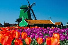 See the best of Amsterdam and windmills galore on this Amsterdam day trip tour that combines two best-selling tours at one low price.