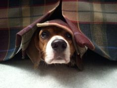 Fireworks or storm anxiety? There's stuff to help. Check out our blog to learn more!  #Pets