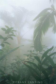 Rainforest vegetation in mist, Costa Rica