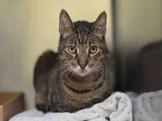 SAFE - 12/19/15 - COOKIECRISP - #A1059510 - - Staten Island  **TO BE DESTROYED 12/16/15** BEGINNER-rated COOKIECRISP is a delightful nugget with glowing volunteer comments: