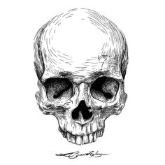 You can find Skull illustration and more on our website. Art Sketches, Art Drawings, Skull Tattoos, Tattoo Ink, Bee Tattoo, Art Tattoos, Skull Reference, Skull Sketch, Totenkopf Tattoos