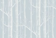 Woods (103/5022) - Cole & Son Wallpapers - A true Cole & Son classic (Michael Clark 1959). A striking design sketched from trees and branches, making a unique repeat in an easy to use paste the wall wallcovering. Shown here in blue and white. Other colour ways available. Please request a sample for true colour match.