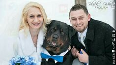 Rottweiler at a wedding