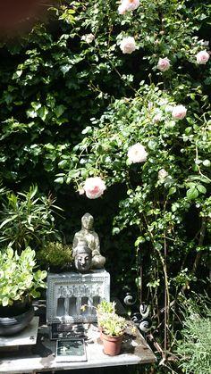 Prachtige rozen in de tuin van  | VIA CANNELLA WOONWINKEL | CUIJK