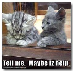 Cats are good listeners.