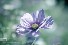 Faint emotion... by lafuguelogos
