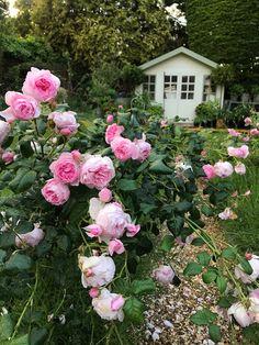Flower Prints, Floral Wreath, Shades, Gardening, Wreaths, Rose, Flowers, Plants, Beautiful