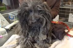 Check Out Dreadlocked Dog's Radical Transformation