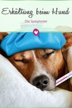 Auch Hunde können eine Erkältung bekommen, daran erkennt man die Krankheit.