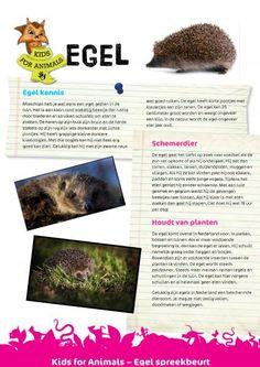 Leuk! Info over de egel voor een kinder spreekbeurt!