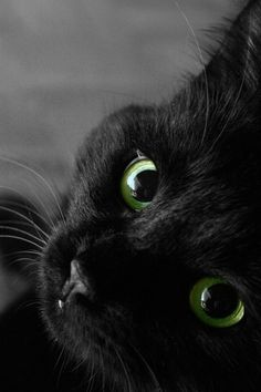 beautiful black cat with haunting green eyes    (via imgTumble)