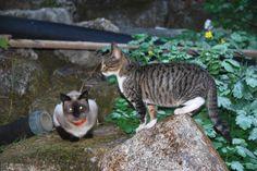 gatinhos, o Tico e o Faísca
