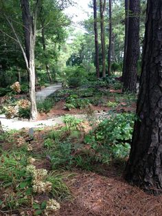 1000 images about fayetteville nc my home town on - Botanical garden fayetteville nc ...