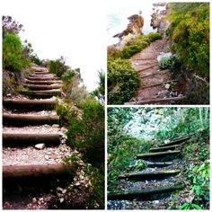The Otter Trail, Tsitsikamma, South Africa. Amazing Photos, Amazing Places, Cool Photos, Over The River, Out Of Africa, Lush Garden, Afrikaans, Countries Of The World, Otters