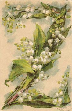 """Catherine Klein -Letter """"Z"""" Art Vintage, Vintage Ephemera, Vintage Postcards, Vintage Images, Vintage Prints, Catherine Klein, Flower Alphabet, Flower Letters, Alphabet Letters"""