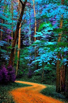 40 Fascinating Photographs Of Forest Paths To Another World – Bored Art