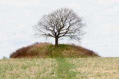 A tree grows atop Mysselhøj, a Nordic Bronze Age burial mound in Roskilde, Denmark