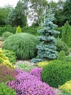I heart conifers! I heart conifers! Amazing Gardens, Beautiful Gardens, Landscape Design, Garden Design, Evergreen Garden, Garden Shrubs, Garden Borders, Front Yard Landscaping, Landscaping Ideas