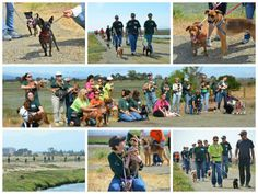 Our amazing volunteers took 22 of our shelter dogs on a two hour long hike in the Palo Alto Baylands. From the looks of it, everyone had a great time!