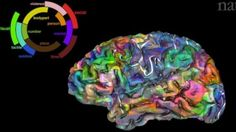Brain map developed by Alexander Huth and colleagues at the University of California, Berkeley.