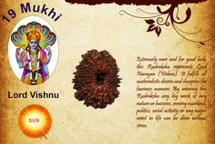 Extremely rare and for good luck, this Rudraksha represents Lord Narayan (Vishnu). It fulfills all materialistic desires and sharpens the business acumen. By wearing this Rudraksha any big work of any nature or business, serving mankind, politics, social activity or any major event in life can be done without stress.