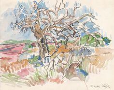 Olivenbaum auf Formentera