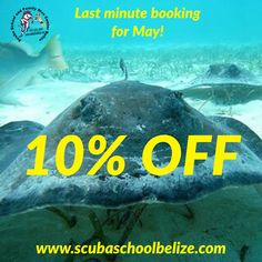 Here we go again!! Save 10% on local dive and all courses. Most book direct. #scubaschoolbelize #Belize #padi #ambergriscaye #SanPedro #tour