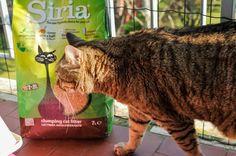 Lettiere vegetali per gatti: le avete mai provate?