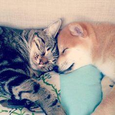 Friendship !! #cat & #dog #cute