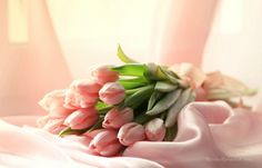 Tulips and Satin ♥